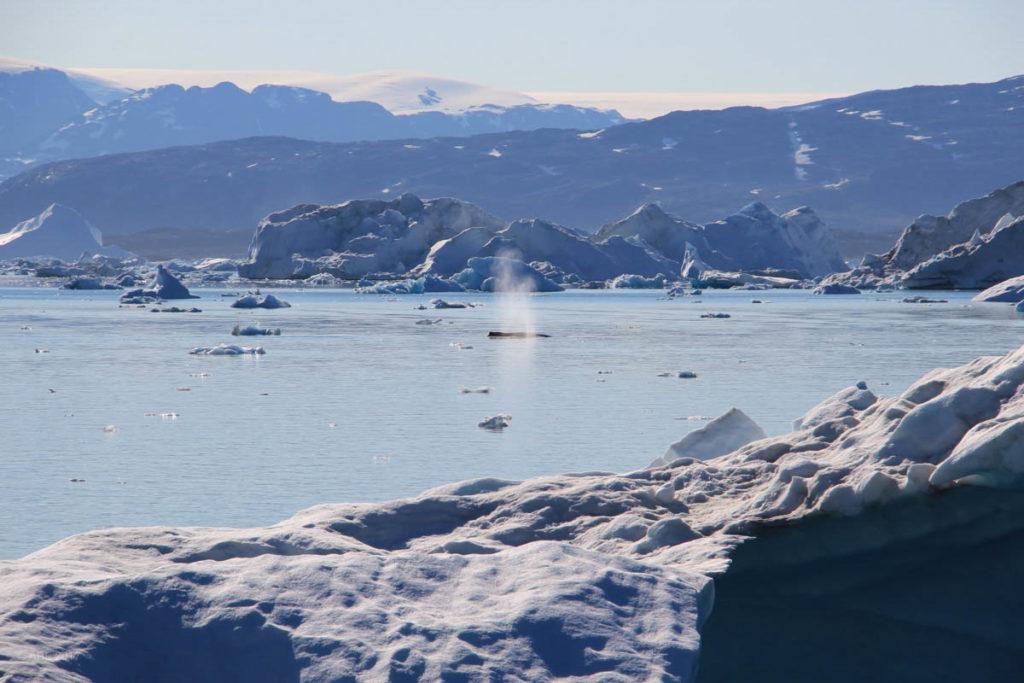 Greenland 2017 Websize - 208.jpg